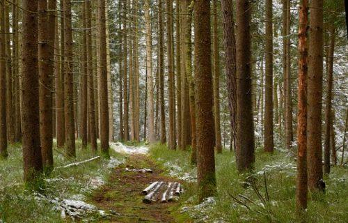MobileForester_diameter_átlalás_diametro albero_1