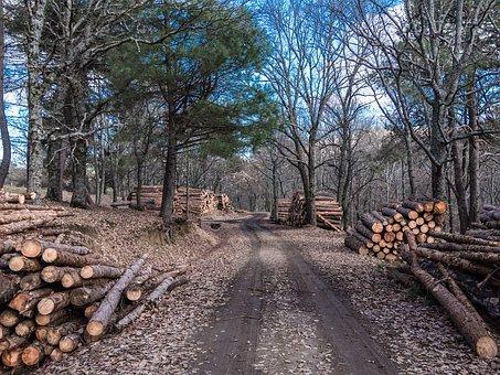 MobileForester_forest owners_magánerdészet_proprietari forestali_1