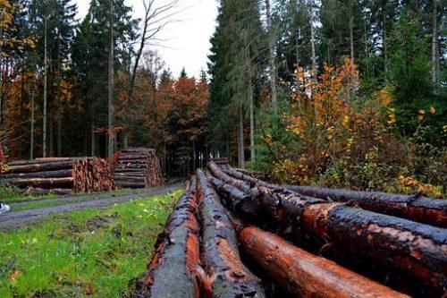 MobileForester_forestries-erdészet_gestori_forestali_2