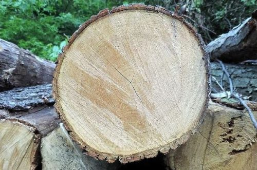 MobileForester_köbözés_timber_log_volume_tronco_1